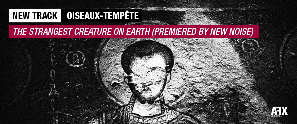 Oiseaux-Tempête The Strangest Creature On Earth